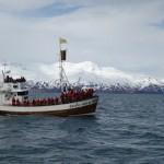 Observation des baleines - Husavik