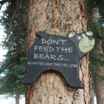 Don't feed the Bears - Carmacks,YT