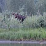 Orignal - Yukon river,YT
