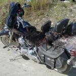 Harley Handicapé - Dawson, YT