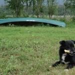 lol dog - Fortymile , YT