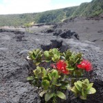 Kilauea Iki Trail - Hawaii