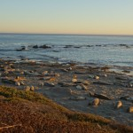 Elephants de mer - Big Sur