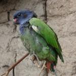 Perroquet - En route vers le Machu Picchu