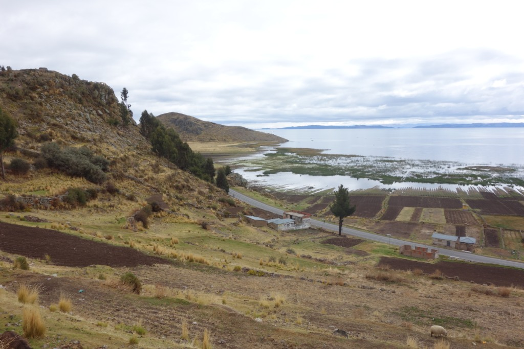 Lac Titicaca - Pomata