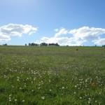 Prairie verdoyante, Futrono