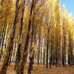 Arbres, Mendoza